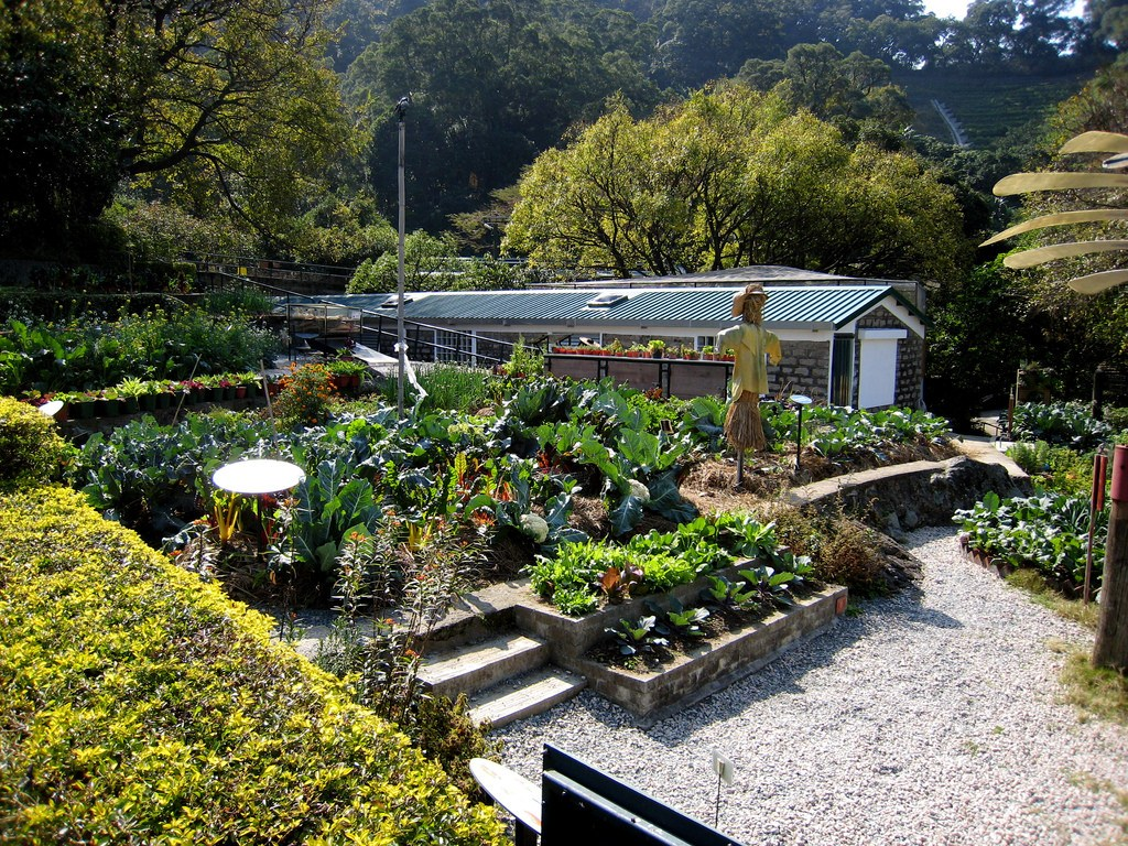the organic vegetable garden at Kadoorie Farm