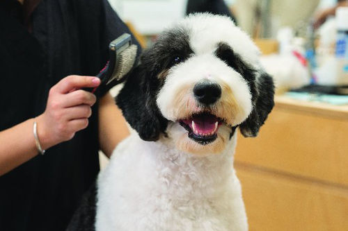 groomer pampering a dog
